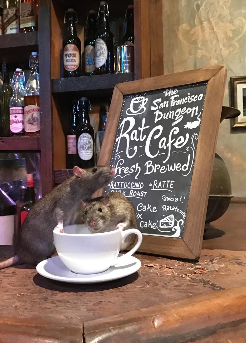 Rat Café !